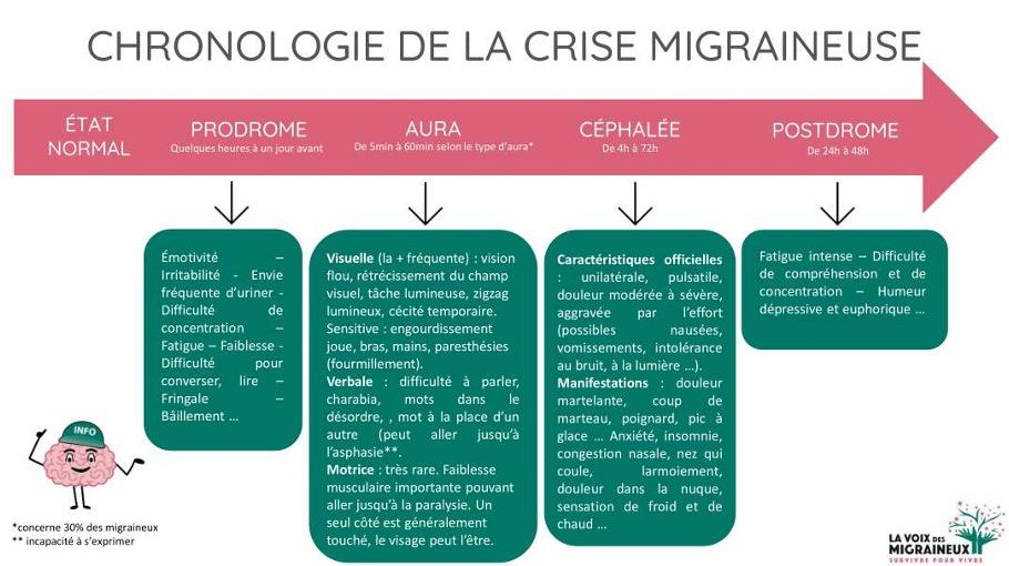 Visuel la chronologie de la crise migraineuse